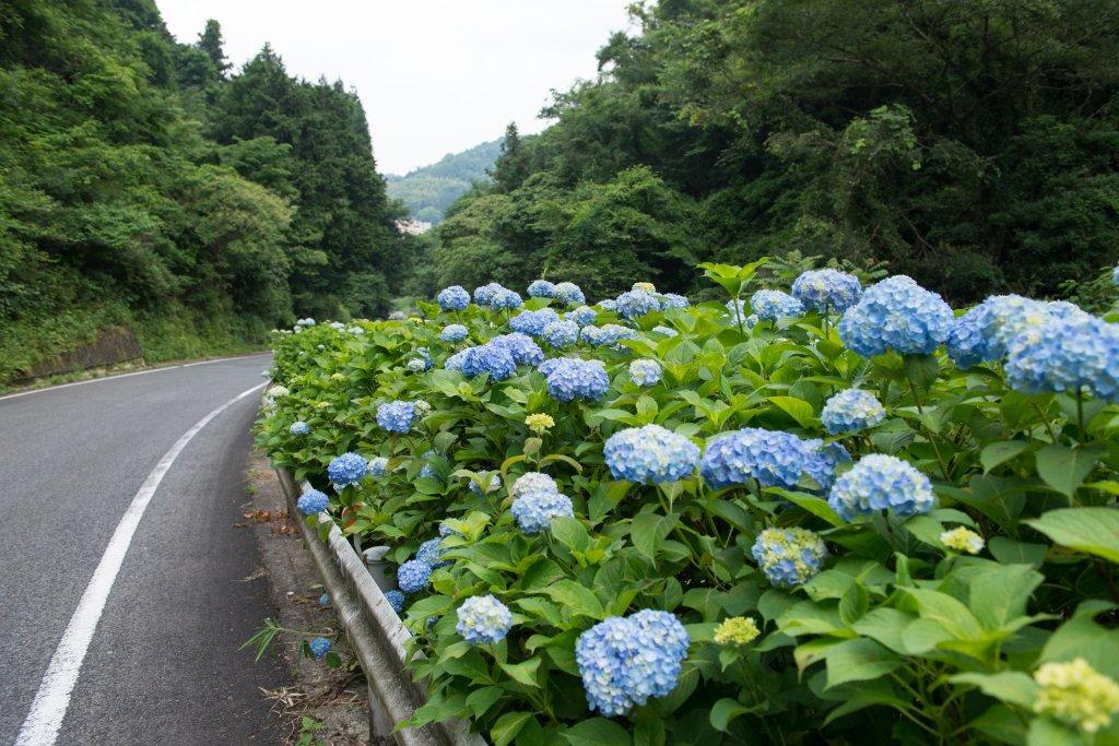 Kifu No Sato Image 27