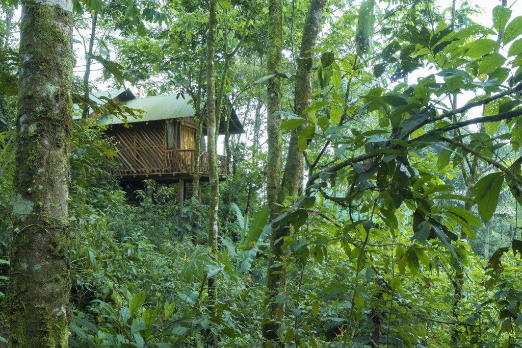 La Tigra Rainforest Lodge Image 26