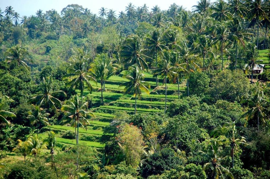Hoshinoya Bali Image 6