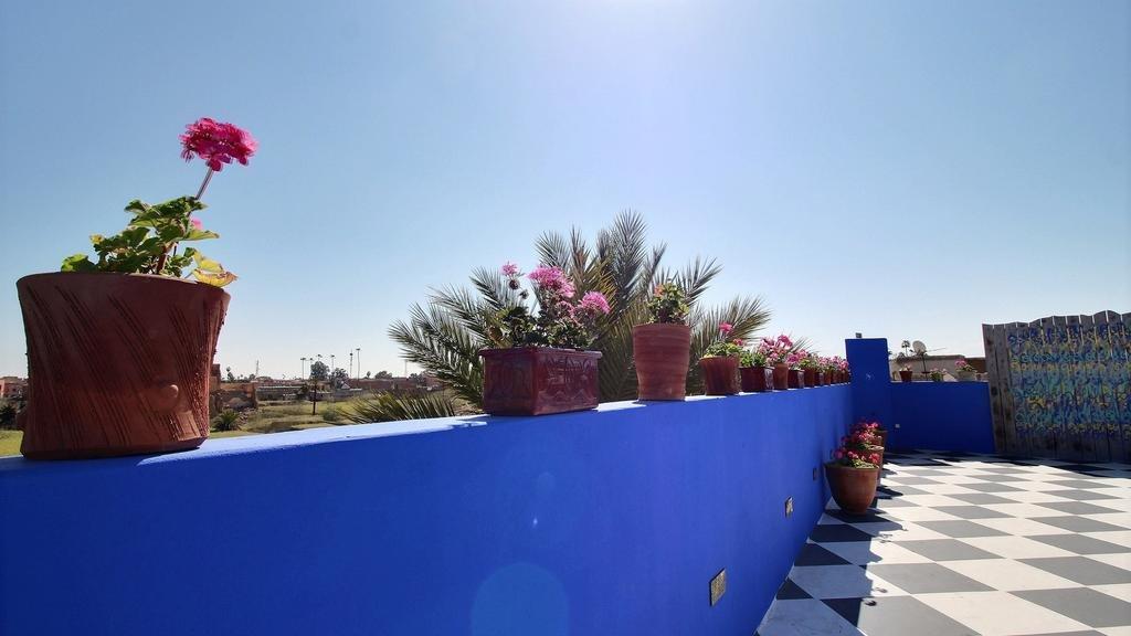 Riad Goloboy Image 16