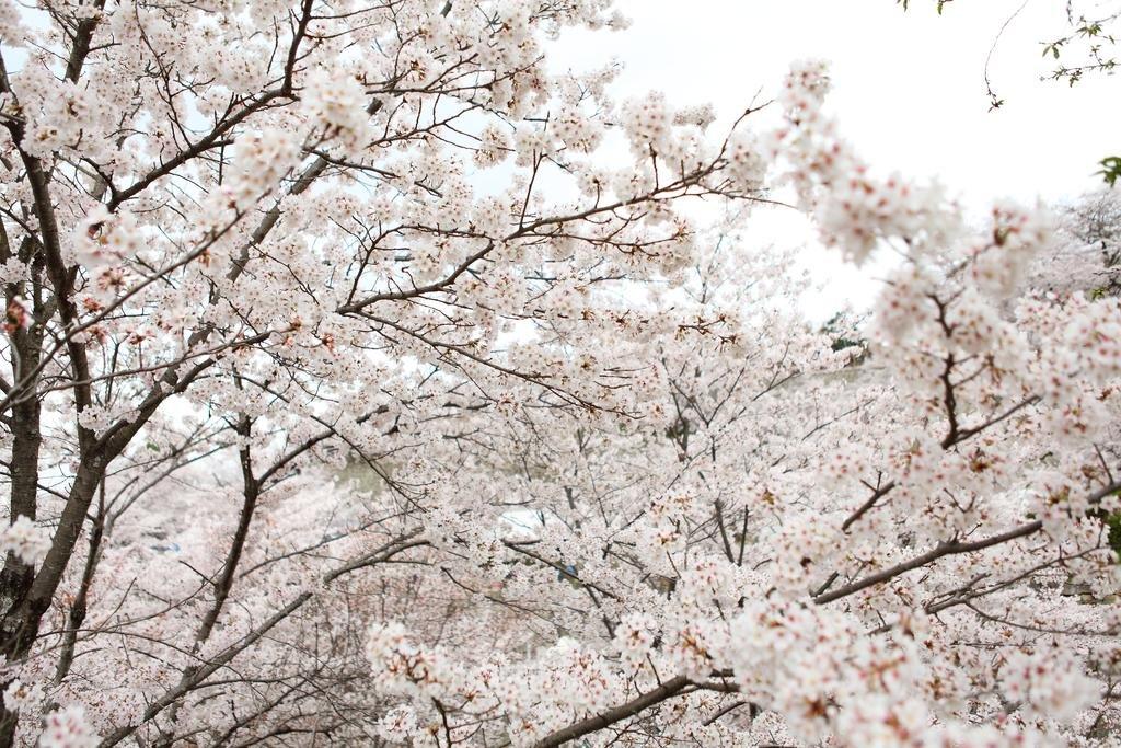 Kifu No Sato Image 9