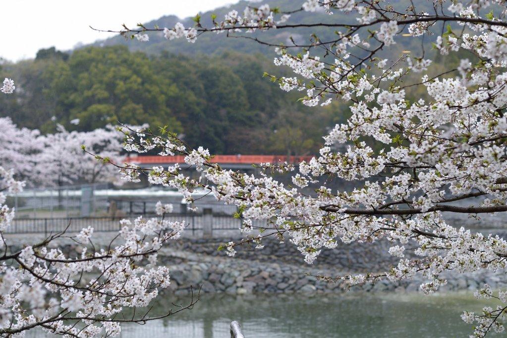 Kyoto Uji Hanayashiki Ukifune-en Image 19