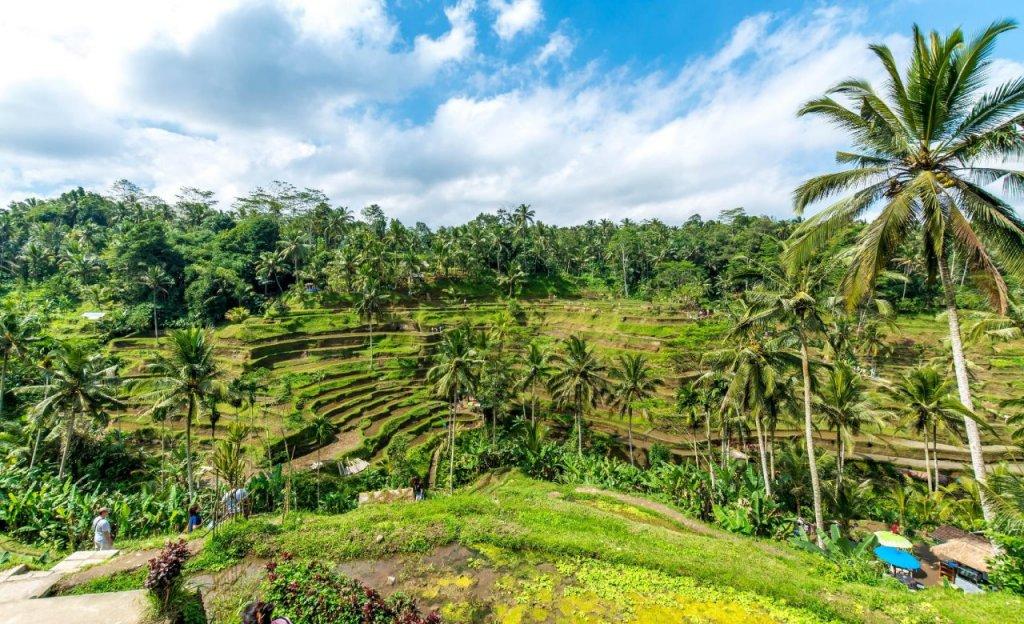 Capella Ubud, Bali Image 49