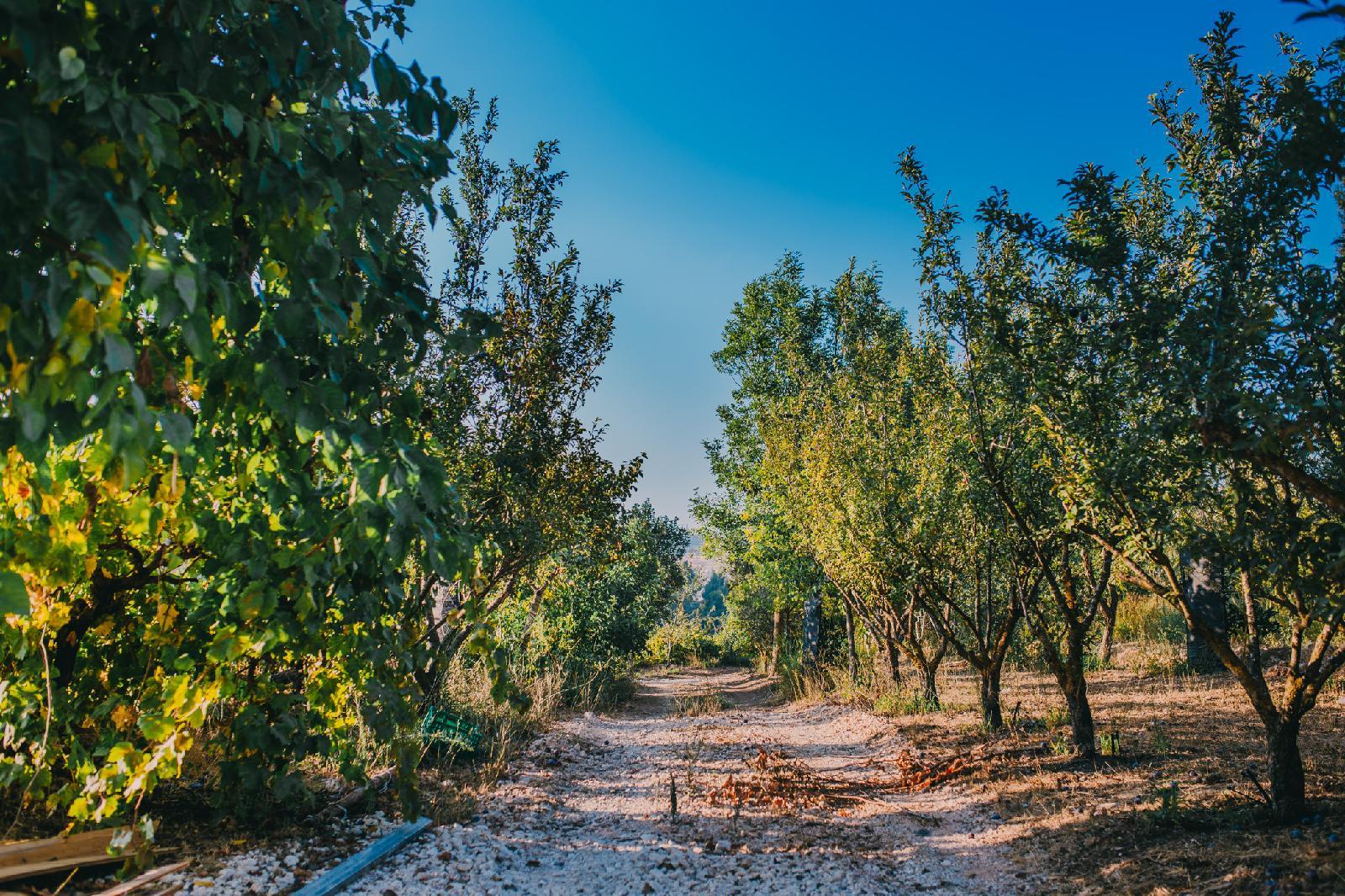 Tur Sinai Organic Farm Resort, Jerusalem Image 4