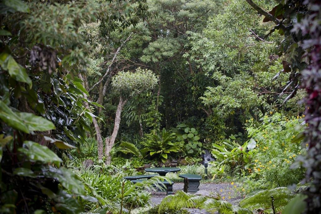 Monteverde Lodge & Gardens Image 38