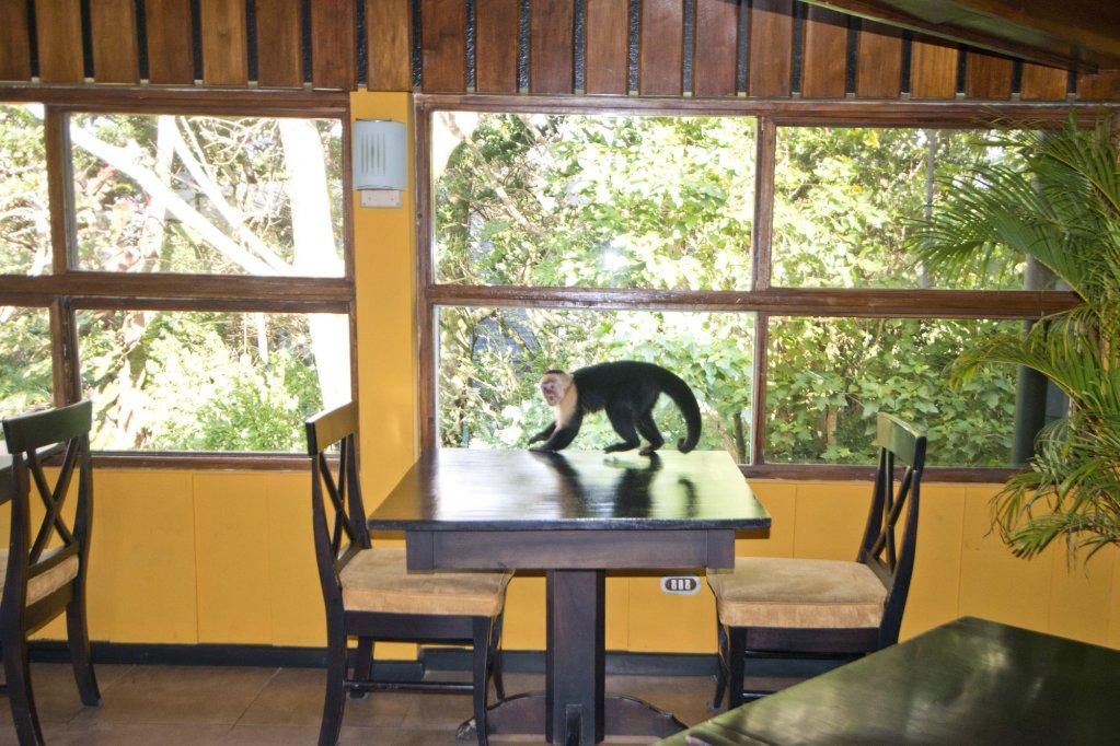 Monteverde Lodge & Gardens Image 13