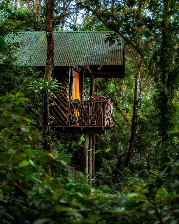 La Tigra Rainforest Lodge Image 42