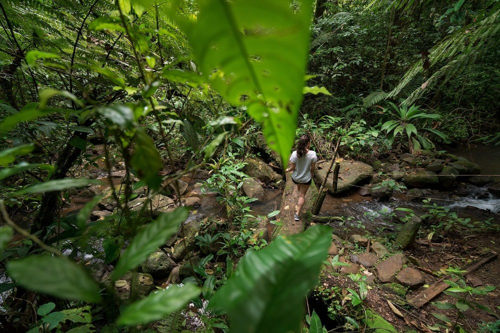 La Tigra Rainforest Lodge Image 31