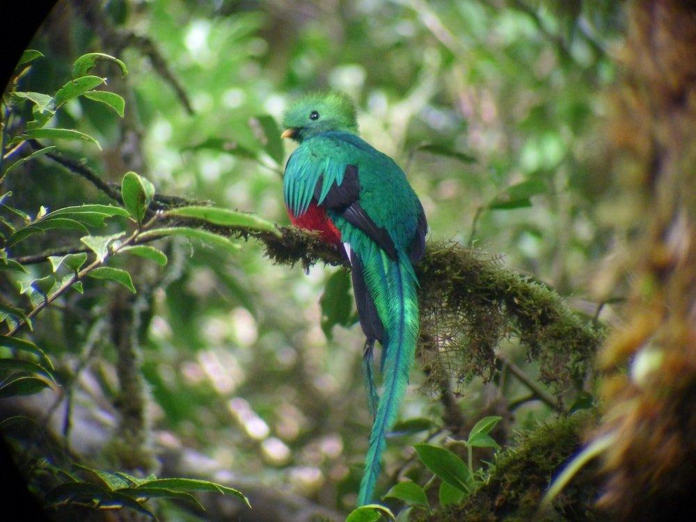 Monteverde Lodge & Gardens Image 12