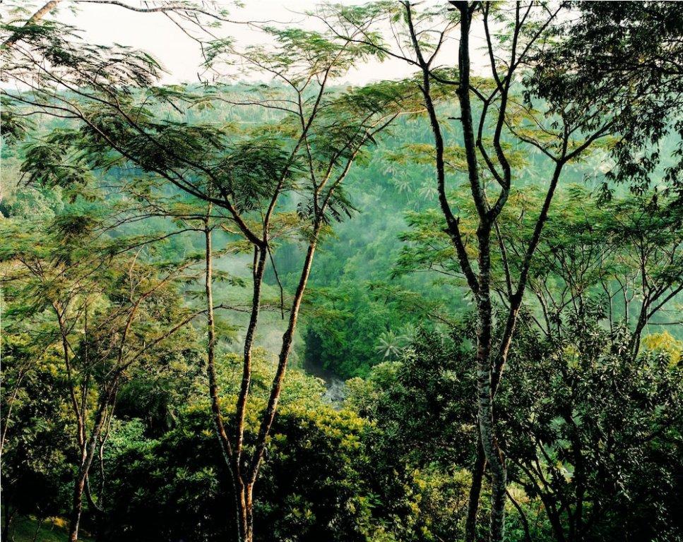 Como Shambhala Estate Image 44