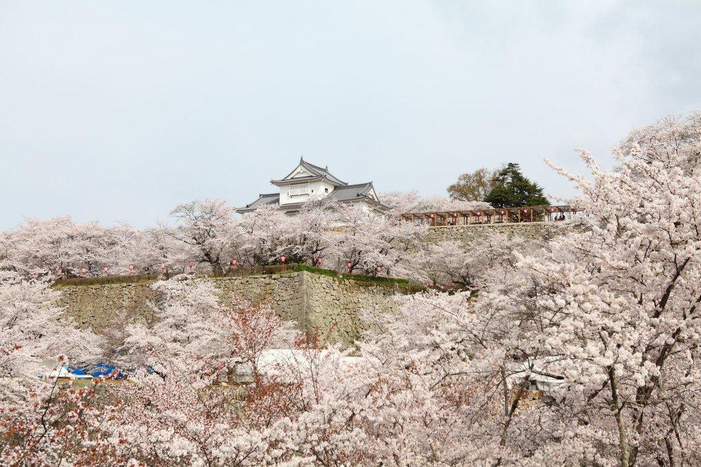 Kifu No Sato Image 26