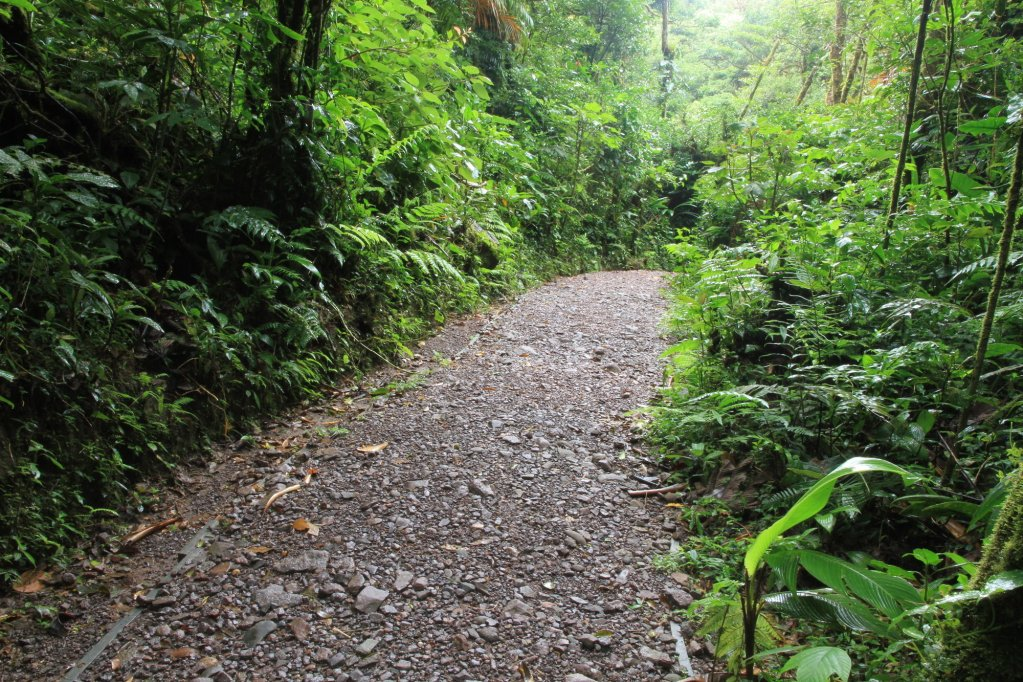 Monteverde Lodge & Gardens Image 46