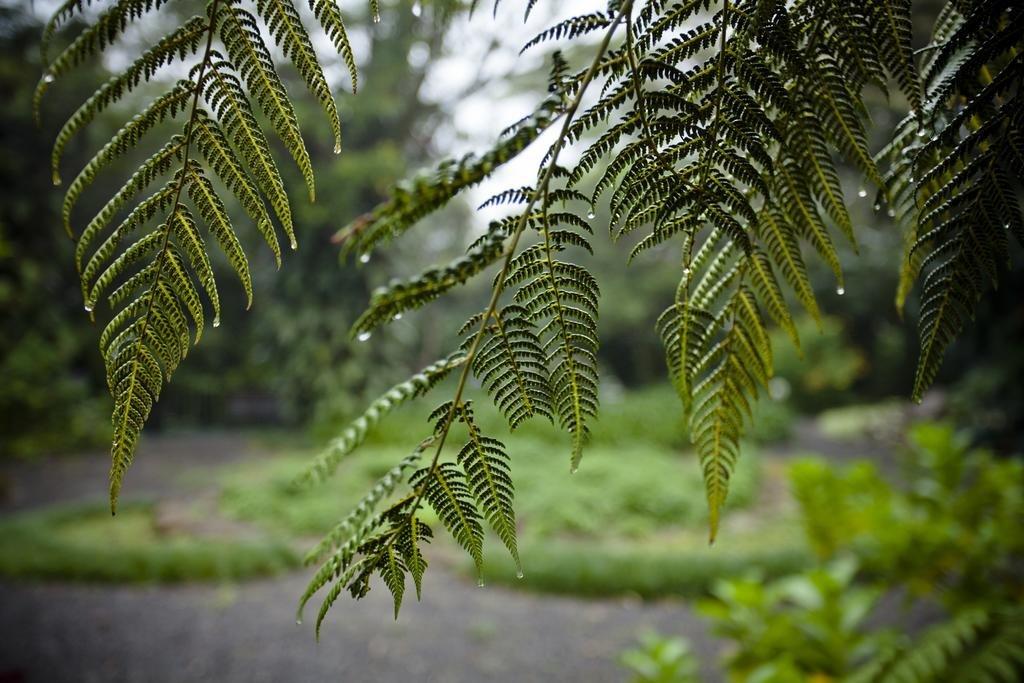 Monteverde Lodge & Gardens Image 40