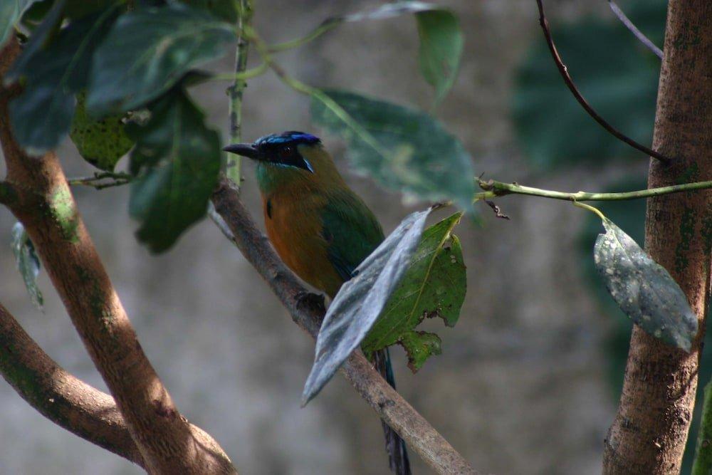 Monteverde Lodge & Gardens Image 39