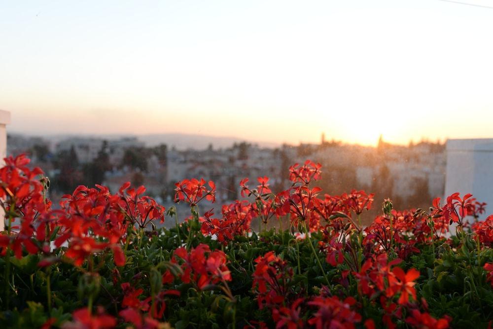 Prima Royale, Jerusalem Image 9
