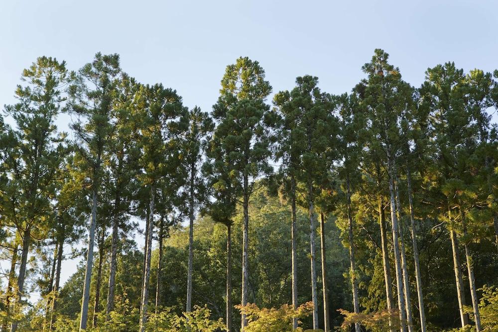 Aman Kyoto Image 14