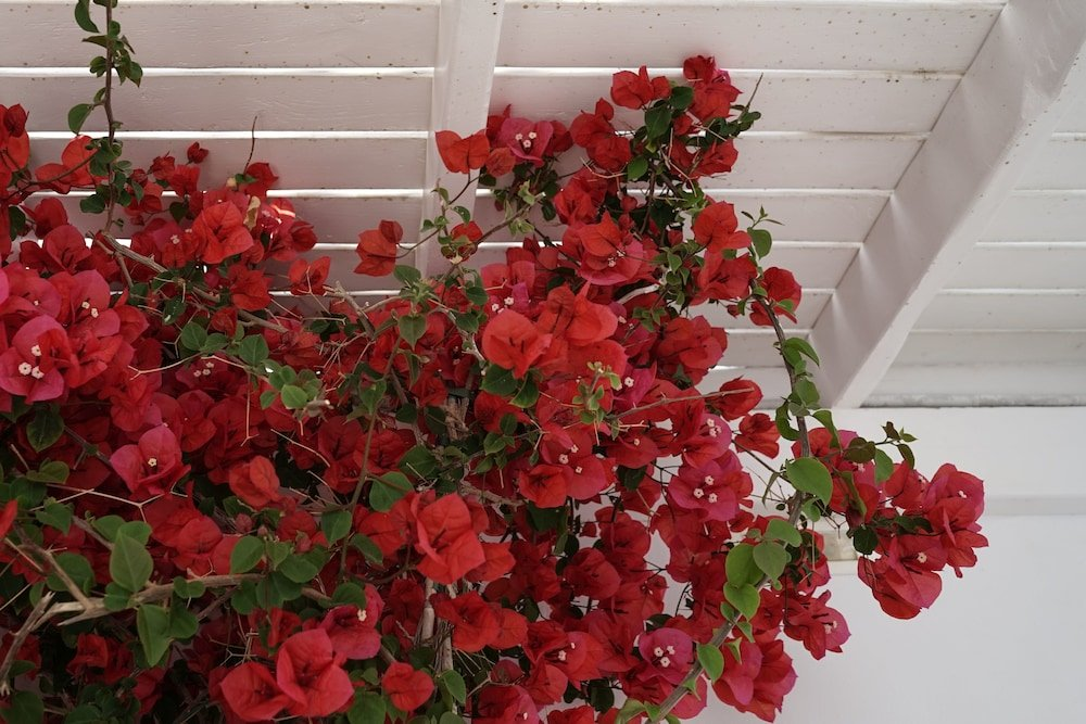Rocabella Mykonos Hotel Image 35