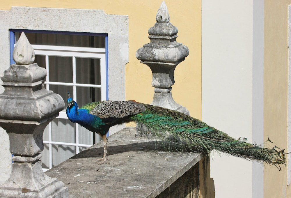 Solar Do Castelo, A Lisbon Heritage Collection, Lisbon Image 19