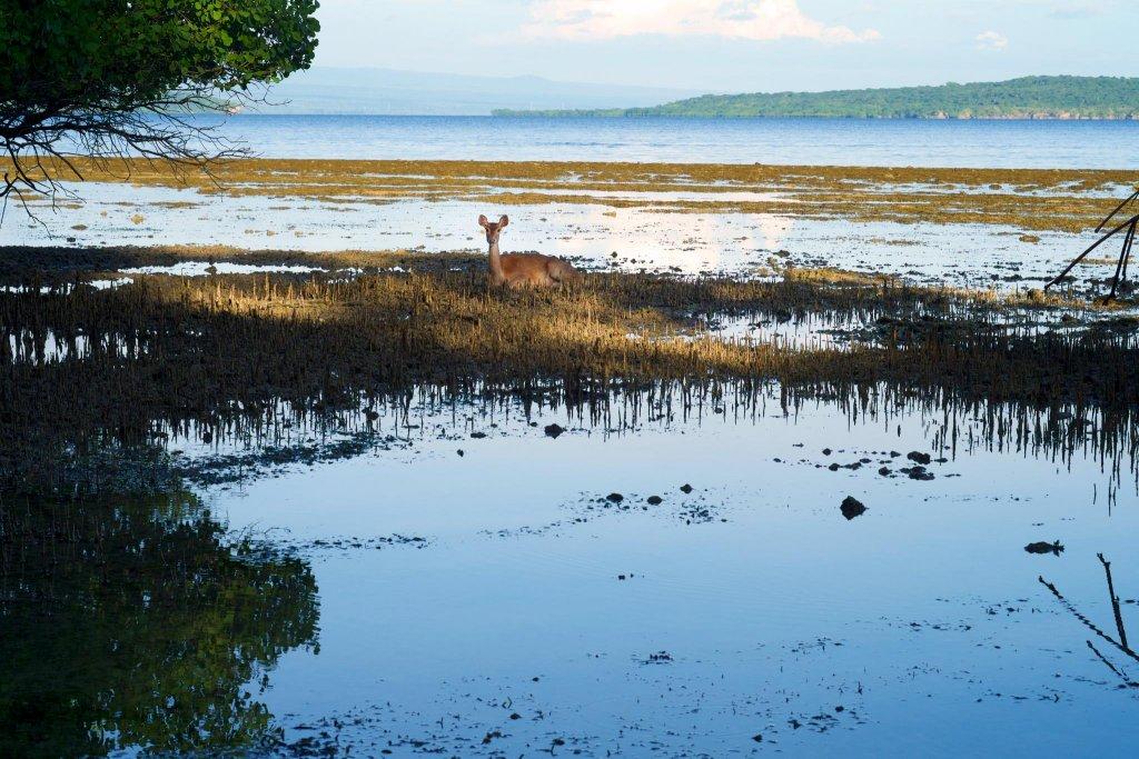 Plataran Menjangan Resort And Spa Image 23